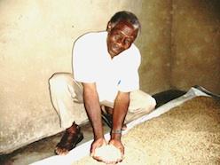 Farmer Stanley Nasasa of Bukalasi, Uganda, shows washed coffee beans. Credit: Wambi Michael/IPS