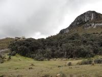 Polylepis forest in El Cajas National Park, Ecuador. Credit: Gonzalo Ortiz/IPS