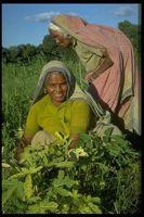 Women farmers in India. Credit: IFAD