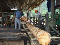 Sawmill in indigenous community of Nuevo San Juan Parangaricutiro, Michoacán, Mexico.  Credit: Courtesy of Nuevo San Juan Parangaricutiro