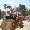 Going to market in Belledare, Haiti.  Credit: Elizabeth Eames Roebling/IPS
