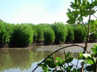 Mangroves Conserved on Kerala Coast Credit: Max Martin