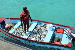 With the high demand for fish by the tourism sector, Barbados imports the majority of the fish consumed here. Credit: Desmond Brown/IPS