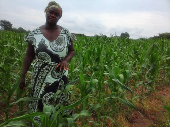 Ellen Kacha aus Hamaundu im Bezirk Pemba hat rechtzeitig auf konservierende Landwirtschaft umgestellt: Trotz der Dürre erwartet sie heuer eine gute Maisernte (Bild: Friday Phiri/IPS).