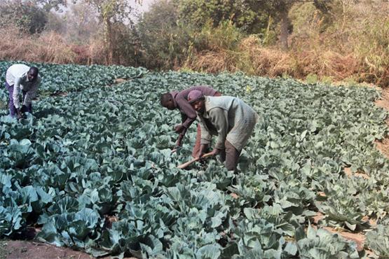 Die Ernährungssituation in der Region Extrême-Nord in Kamerun hat sich durch die Angriffe von Boko Haram aus dem benachbarten Nigeria verschlechtert (Bild: Mbom Sixtus-Yaounde/IPS).