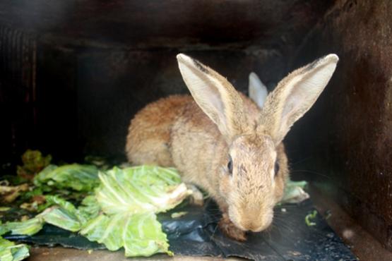 Immer mehr Menschen in Simbabwe entscheiden sich für die Aufzucht von Kaninchen. Für viele Züchter bringt die hohe Nachfrage einen ökonomischen Aufstieg. (Bild: Jeffrey Moyo/IPS)