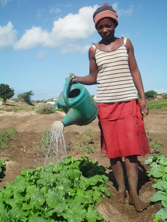 Durch die Dürre wurden im Süden von Madagaskar 80 Prozent der Ernte vernichtet. Davon ausgenommen sind jene Landwirtschaften, die rechtzeitig Vorkehrungen getroffen hatten. (Bild: Miriam Gathigah/IPS)