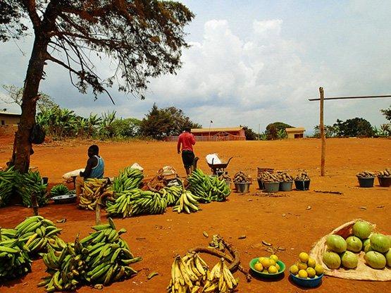 Kochbananen auf einem Markt im Westen von Kamerun (Bild: SarahTZ auf Flickr, CC BY 2.0)