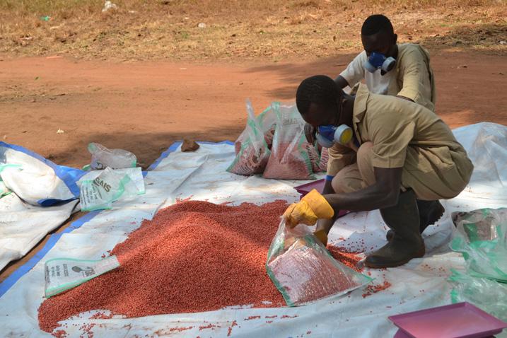 Ehemalige Kämpfer verpacken dürretolerantes Saatgut. (Bild: Isaiah Esipisu/IPS)