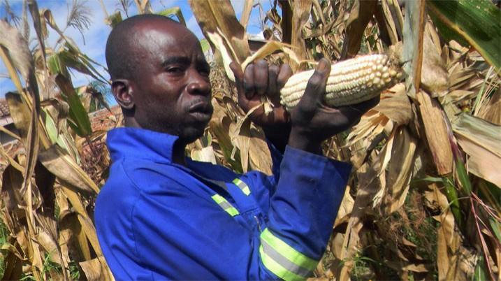 Durch die Landreform hat die Landwirtschaft in Simbabwe schweren Schaden genommen. Nun möchte die Regierung brach liegende Felder neu vergeben. (Bild: Cecil Bo Dzwowa, Shutterstock.com)