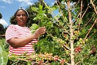 Lucy Wanjiku Macharia tends coffee bushes at her farm at Nyarugum-Nyeri in Central Kenya. Only five percent of women in Kenya own land.  / Credit:Suleiman Mbatiah/IPS