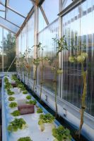Urban Farming Takes Root in Europe thumbnail